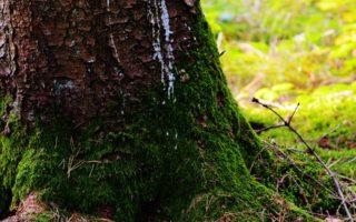 Analisis Kebijakan Penundaan Pemberian Izin Baru dan Penyempurnaan Tata kelola Hutan Alam Primer dan Lahan Gambut