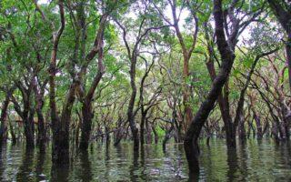 Hutan dan Pesisir