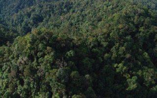 Potret Hutan Indonesia