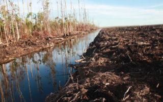Akhiri Rezim Keterlanjuran, Restorasi Ekosistem Rawa Gambut dengan Penegakan Hukum