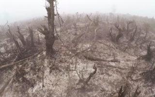 Koalisi Masyarakat Sipil: Upaya kasasi akan merugikan masyarakat, pemerintah diminta menjalankan putusan pengadilan demi korban asap kebakaran hutan