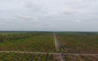 The Fate of Palm Oil Plantation Moratorium