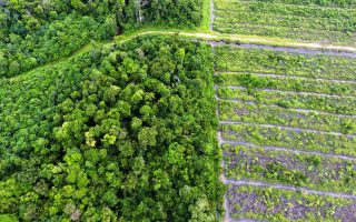 WALHI's response to the issuance of Presidential Instruction No. 8/2018 concerning Postponement and Evaluation of Palm Oil Licensing and Increasing Productivity of Palm Oil Plantations: